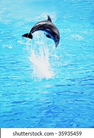 Dolphin jumping in the sea