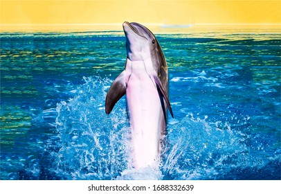 Dolphin jumping in water view. Dolphin jump and play in water. Jumping dolphin