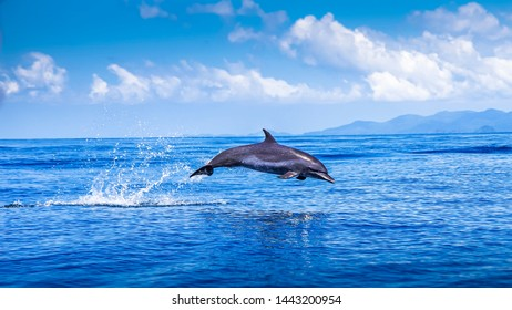 Dolphin jumping in the waters of the Pacific Ocean around Coiba Island
