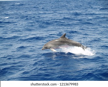 Dolphin jumps out of the water