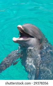 Dolphin laughing at the crowd