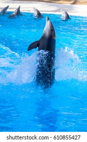 Dolphin at Loro Parque at Canary Islands, Tenerife, Spain