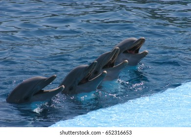 Dolphin on show