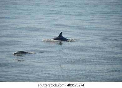 Dolphin over the horizon