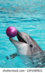 Dolphin playing with a ball in the water