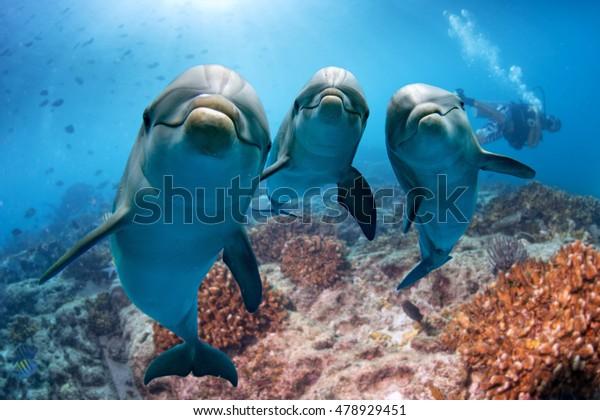 Дельфин портрет деталь глаз, глядя на вас из океана