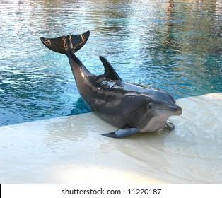 Dolphin Posing