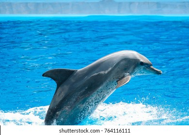 dolphin show animal jump nature