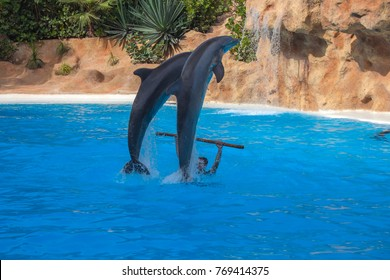 dolphin show in sunny day