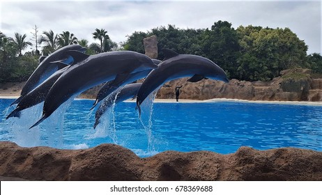 Dolphin Show/ Tenerife/ Loro Park
