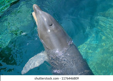 dolphin showing its blowhole