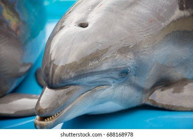 Dolphin smart and beautiful swims in blue water