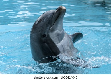 Dolphin in Smile