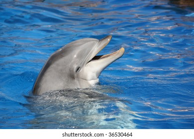 dolphin smiling in a blue water pool