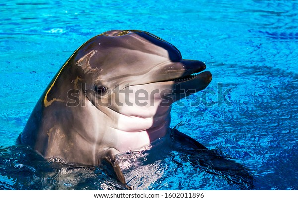 Dolphin smiling in water scene. Dolphin portrait in water. Dolphin face. Dolphin portrait