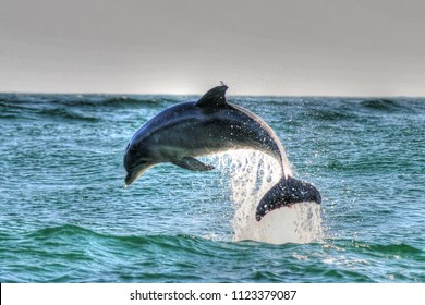 Dolphin in St Andrews St Park, Panama City Beach Fl