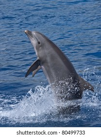 Dolphin standing