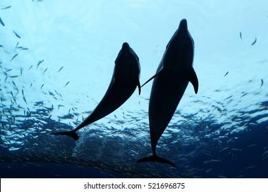 Dolphin swim.