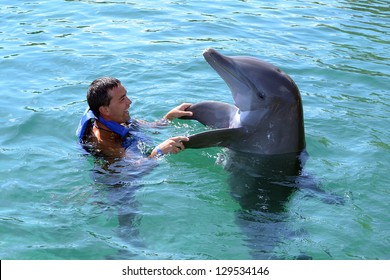 dolphin  swimming in dolphinarium with people