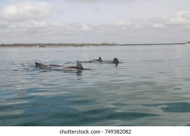 Dolphin swimming right next to our boat - Watamu Marine Reserve Kenya