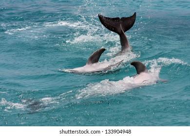 Dolphin swimming in the sea