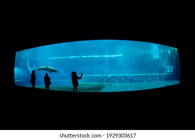 dolphin tank in aquarium with people silohuette
