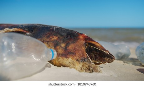 Dolphin thrown out by the waves lies on the beach is surrounded by plastic garbage. Bottles, bags and other plastic debris near dead dolphin on sandy beach on Sea background. Plastic pollution.