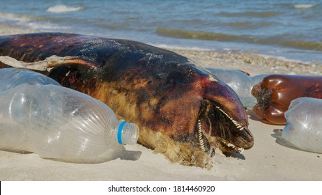Dolphin thrown out by the waves lies on the beach is surrounded by plastic garbage. Bottles, bags and other plastic debris near is dead dolphin on sandy beach.