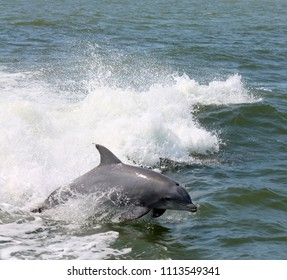 Dolphin Tour Rudee Inlet