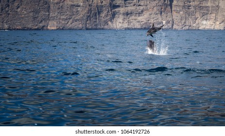 Dolphin trip. Here you can observe dolphins in the ocean, their natural habitat. The location of this photo is Tenerife, Canary Island, Spain.