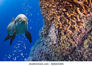 dolphin underwater on deep blue sea background looking at you