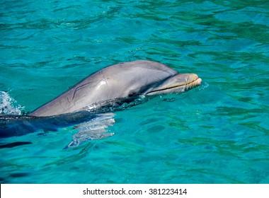 Dolphin -Views around the Caribbean island of Curacao