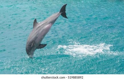 Dolphin - Views around Curacao a small Caribbean Island