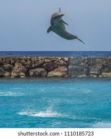 Dolphin   Views around the small Caribbean island of Curacao