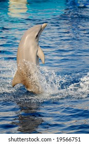 dolphin in the water