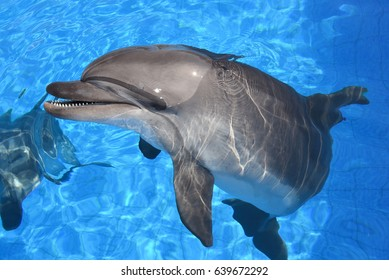 dolphin in the water, dolphin playing