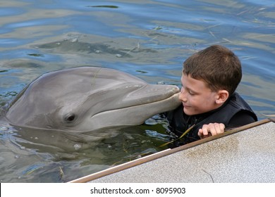 Dolphin and a Young Boy