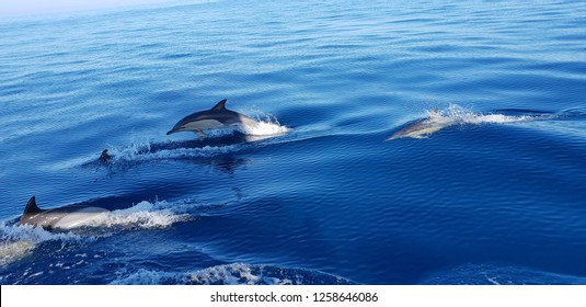 Dolphins in the Algarve Portugal