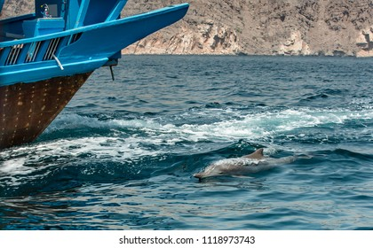 dolphins in a coastal waters of Musandam