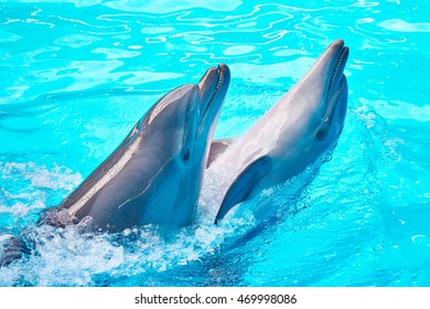 Dolphins dancing into pool on the circus show