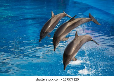 Dolphins dive into water, doing performance in park