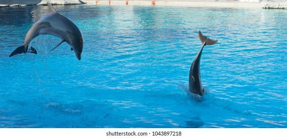 Dolphins jumping at circus