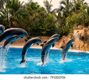 Dolphins jumping in pool