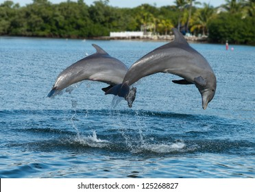 Dolphins jumping in unison