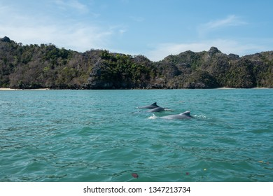 Dolphins at Mangroves tour in Kilim Karst Geoforest, Langkawi