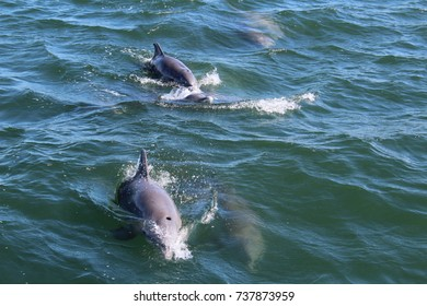 Dolphins in Ocean Port Aransas Texas