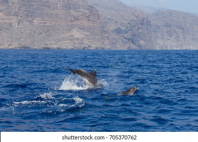 Dolphins in the ocean. Dolphins with a scratched back. Hunting for dolphins. Animal protection.