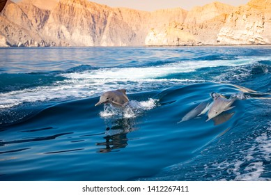 dolphins in Oman. dolphins jumping