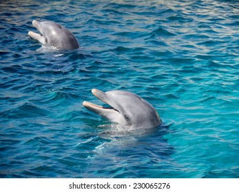 Dolphins on Curacao a tropical island in the Caribbean