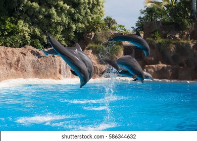 Dolphins performing at a show in Tenerife
